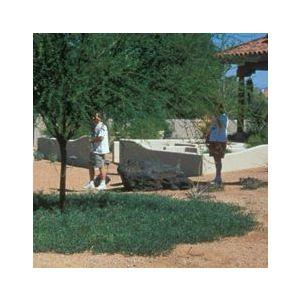 Acacia redolens 'Desert Carpet'