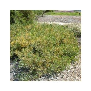 Buy Wholesale Ground Cover Online