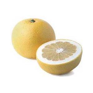 Citrus Grapefruit 'Oroblanco' Standard