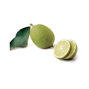 Citrus Lime 'Bearss' Standard