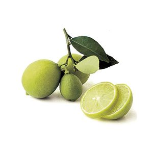 Citrus Lime 'Mexican' Standard ('Key Lime')