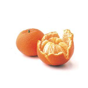Citrus Mandarin 'Algerian' Standard ('Clementine')('Fremont')