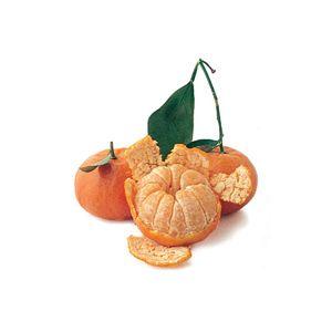 Citrus Mandarin 'Dancy' Standard