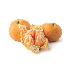 Citrus Mandarin 'Satsuma' Standard ('Owari')