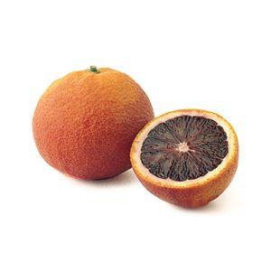 Citrus Orange 'Moro Blood' Standard