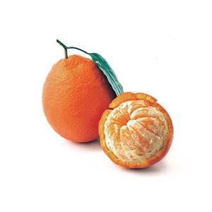 Citrus Tangelo 'Minneola' Standard