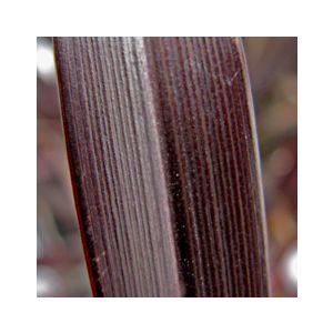 Phormium 'Platt's Black'