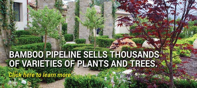 Bamboo Pipeline sells thousands  of varieties of plants and trees.