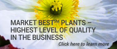 Market Best(sm) Plants – 