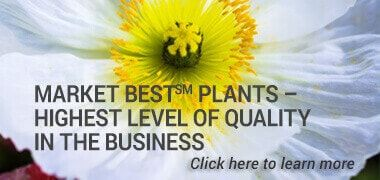 Market Best(sm) Plants –  Highest Level of Quality in the Business