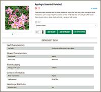 aquilegia 'assorted varieties'