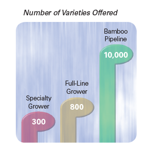 Bamboo Pipeline sells thousands of varieties of plants and trees