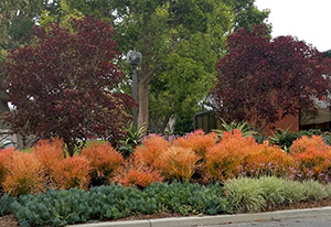 Alternative Front Yard Landscape