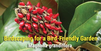 Birdscaping for a Bird-Friendly Garden