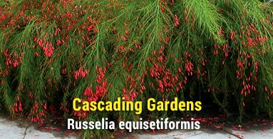 Cascading Gardens