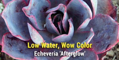 low-water-wow-color
